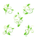 Set green floral elements with eco leaves isolated Royalty Free Stock Image