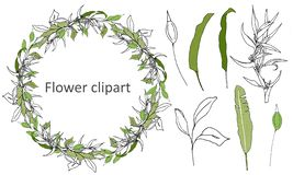 Set of green floral patterns, ornaments. Vector wreath of green leaves and contour flowers for decoration. The concept of spring. Set of green floral patterns stock illustration