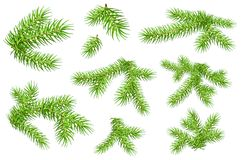 Set of green fluffy fir pine branches isolated on white background. Vector nature xmas illustration Stock Image