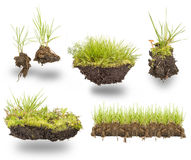 Set green grass. With earth isolated on white background Stock Image