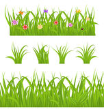 Set green grass isolated on white background Royalty Free Stock Image