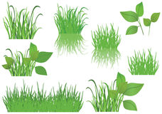 Set of green grass - vector Stock Photos