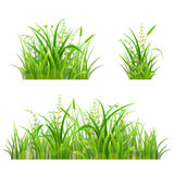 Set of green grass Royalty Free Stock Image
