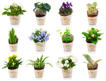 Set of green house plant and flower. In paper packaging, on white background Royalty Free Stock Images