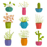 Set of green indoor plants in pots Royalty Free Stock Photos