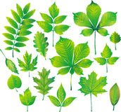 Set of green leaf Stock Images