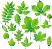 Set of green leaf Stock Images