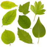 Set of green leaf Royalty Free Stock Photos