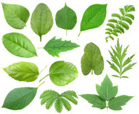Set of green leaf Stock Photo