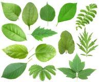 Set of green leaf Stock Photo