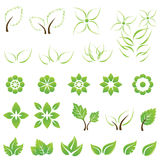 Set of green leaf and flower design elements. This image is a vector illustration Royalty Free Stock Photos