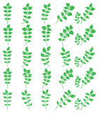 Green leaf. Set of green leaf icons  on white background. Leaves icon vector. illustration Royalty Free Stock Images