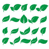 Green leaf icons. Set of green leaf icons  on white background. Leaves icon vector. illustration Royalty Free Stock Image
