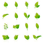 Set of green leaf icons on white background Royalty Free Stock Images