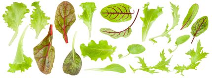 Set of green leaf lettuce and beets isolated on white background. Set of fresh green lettuce leaves isolated on white background, detail for collage, close up Stock Photos