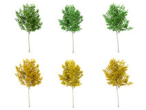 Set of green leaf tree and yellow leaf tree on white background. 3D rendering Royalty Free Stock Images