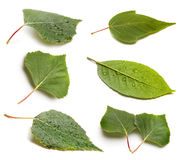 Set of green leaf on white Stock Photos
