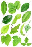 Set of green leafs isolated with clipping path. Set of green leafs isolated on white background with clipping path Stock Images