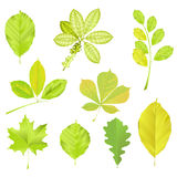 Set of green leaves. 9 isolated green leaves on white background Royalty Free Stock Photography