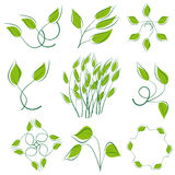 A set of green leaves Stock Photography