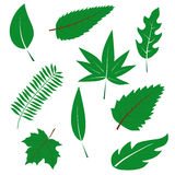 A set of green leaves Stock Photo