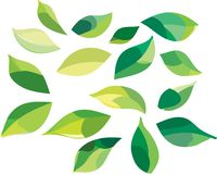 Set of green leaves Stock Photography