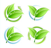 Set of green leaves Royalty Free Stock Image