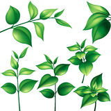 Set of green leaves Royalty Free Stock Images