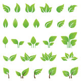 Set of green leaves design elements Royalty Free Stock Photography