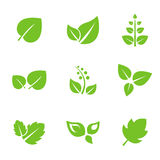 Set of Green Leaves Design Elements Royalty Free Stock Photo