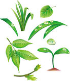 Set of green leaves and grass vector illustration