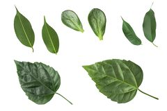 Collection of Green Leaves isolated on white background stock photos