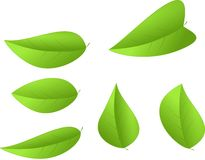Set of green leaves isolated Stock Image