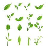 Set of green leaves Stock Images
