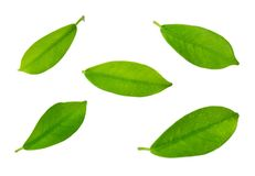 Set of Green Leaves Laying on White Background Royalty Free Stock Photo