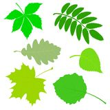 Set of green leaves. Stock Photos