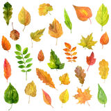 Set of green leaves in watercolor Royalty Free Stock Photography