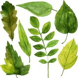 Set of green leaves in watercolor Royalty Free Stock Image