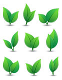 Set of green leaves. On a white background. Vector illustration Stock Images