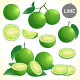 Set of green lime in various styles vector format. Set of green lime with leaf in various styles vector format Royalty Free Stock Image