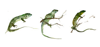 Set of green lizards on the white background. Watercolor painting. Royalty Free Stock Photo
