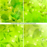 Set of green nature backgrounds with leaves and Royalty Free Stock Image