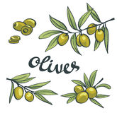 Set of green olives. Vector isolated objects. Royalty Free Stock Photos