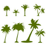 Plam trees Royalty Free Stock Image