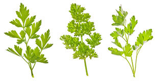 Set of green parsley Royalty Free Stock Image