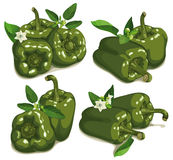 Set of green pepper Stock Images
