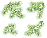 Set green pine branch isolated on white. Fir branch under snow. Vector christmas design element illustration Stock Photography