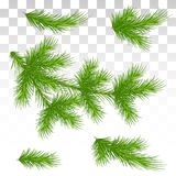 Set of green pine branches. Isolated. Christmas. Decor. The Chri. A large set of different green pine branches. Isolated. Christmas. Decor. Green lush spruce or Stock Photography