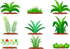 Set of green plant on a white background Royalty Free Stock Image