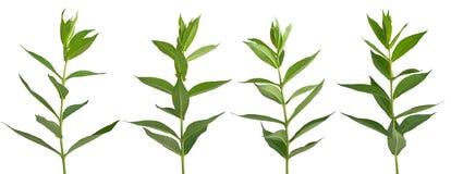 Set of green plants Stock Photos